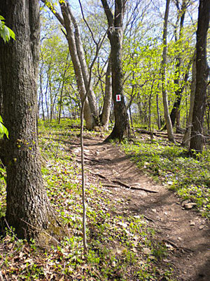 Singletrack at Smithville Lake Trails, photo by S. McCreary